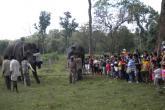 Dubare Elephant Farm