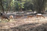 Kaveri Zoo